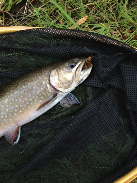 Trout fishing at Turtle Creek Outfitters
