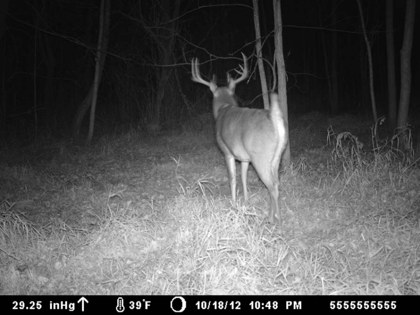 Trophy Buck at TCO