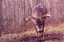 WI deer outfitter trophy buck